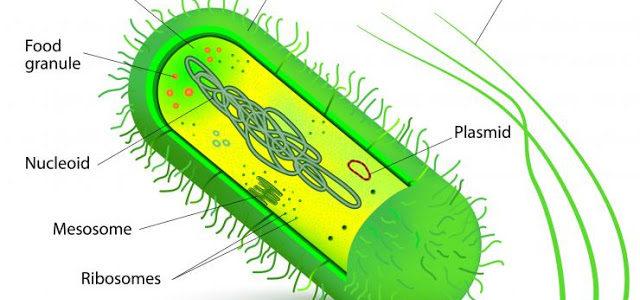 Major diseases in our bodies from bacteria हमारे शरीर में जीवाणु से होने वाले प्रमुख रोग