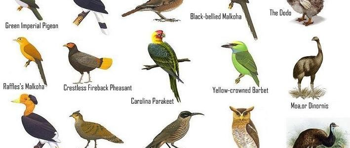 List of Indian State Wise Famous Birds