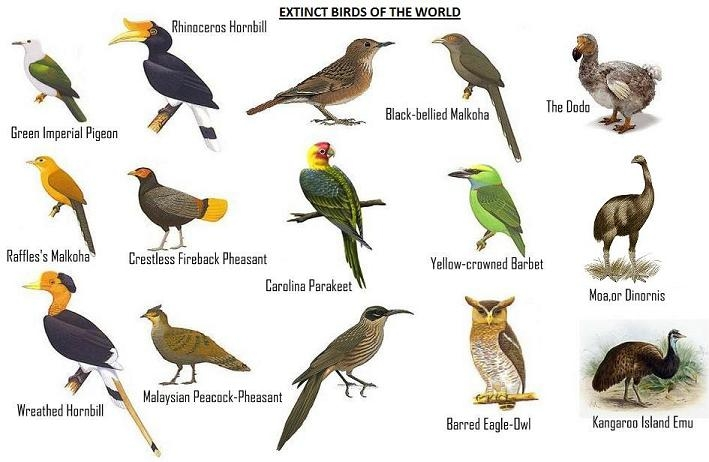 Beautiful types of birds in india
